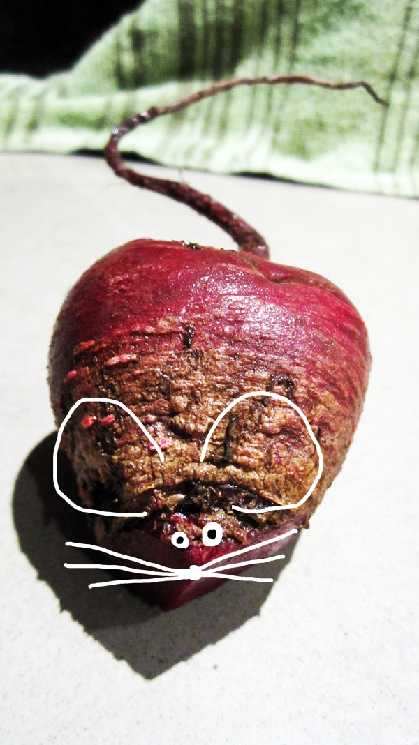 The elusive beet-mouse
